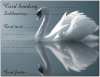 Postcard design - Swan Reflection